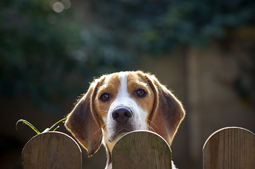 choose ideal fence for your dog
